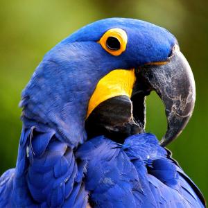 blue@mastodon.ml